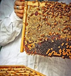 An apiary (also known as a bee yard) is a place where beehives of honey bees are kept!
