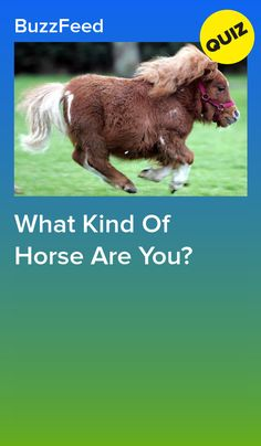 Get off your high horse and come take this quiz. Quizzes For Fun, Girl Quizzes, Funny Horses, Cute Horses, Horse Quizzes, Buzzfeed Personality Quiz, Native American Zodiac, Westerns, Horse Girl Problems