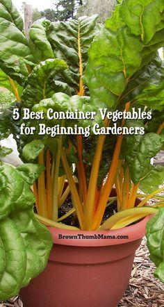 5 favorite container vegetables for beginning gardeners