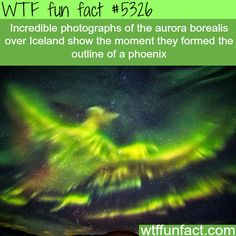 Photograph of the aurora borealis forming a phoenix - WTF fun facts