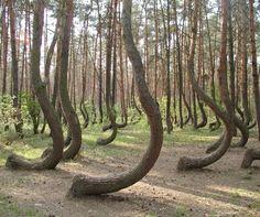 crookedforest