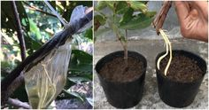 Plants, Decor, The Creation, Decoration, Decorating, Flora, Dekorasyon, Plant, Dekoration