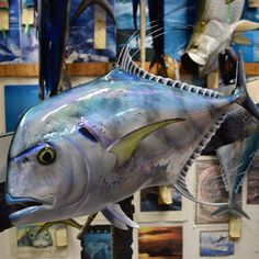 151 Best Fly Fishing Taxidermy images in 2019 | Fly fishing