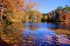 Fall color at Bass Pond on the Biltmore Estate in Asheville