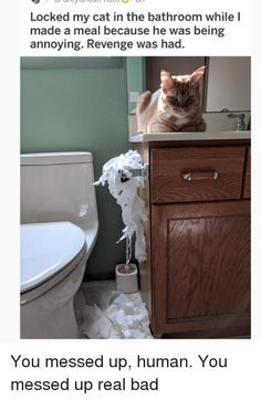 Bad, Memes, and Revenge: Locked my cat in the bathroom while lI made a meal because he wa...