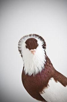 Felegyhazer pigeon (Picture: Richard Bailey/Caters News)