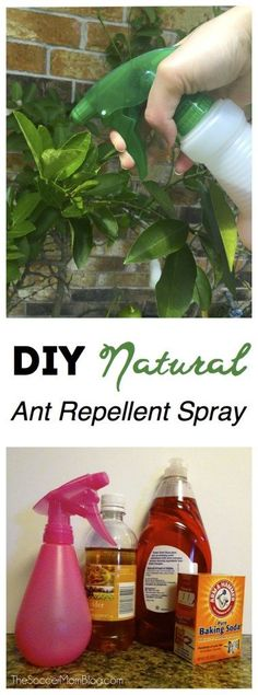 DIY All Natural Ant Repellant Spray is SAFE, CHEAP, and IT WORKS! |  2 cups apple cider vinegar 2 TB dish liquid 2 TB baking soda Fill the rest with water