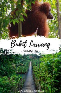 Bukit Lawang: op zoek naar orang-oetans - Dutchie on the Road Borobudur, Komodo, Yogyakarta, Lombok, Ubud, Travel Goals, Continents, Bali, Exotic