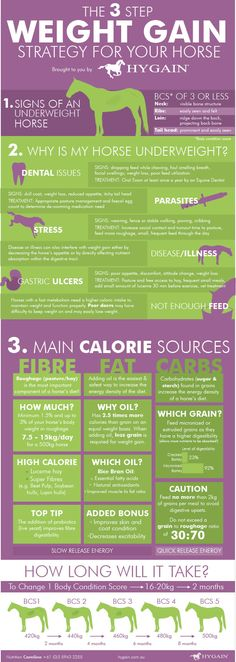 **FREE Horse health fact sheet** Many of our horses unfortunately struggle to gain weight or keep the weight on, especially throughout winter with decreasing temperatures.  This quick reference fact sheet gives you a three step strategy to get the weight back on your horse, including an analysis of your horse's current body condition, guidelines to a physical health assessment and presents safe and effective weight gain feeding choices.