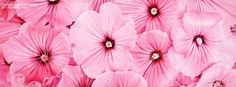 Pretty Pink Flowers Cover
