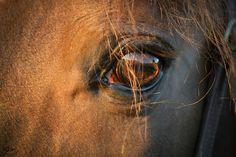 Feuerpferd🐎 Pferde Augenblicke von jrkphotography Horses, Animals, Animales, Animaux, Animal, Animais, Horse