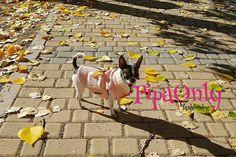 ¡Ropa Perros para El Frio. Moda Canina!