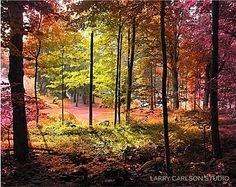 Cabin in the Woods Forest Trees Colorful Fine Art Photograph / warm autumn fall colors / psychedelic trippy art / matted photo / birch maple. $75.00, via Etsy.