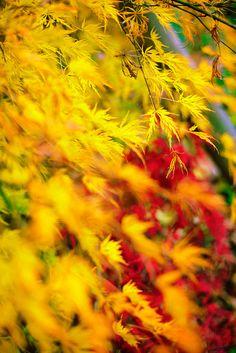 glorious autumn colors