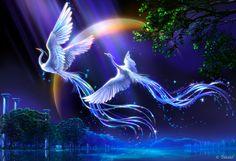 Oiseaux de la nuit Quel beau couple d'oiseaux du paradis laissant leur pluie féerique inonder le monde d'un amour et d'une paix magique.