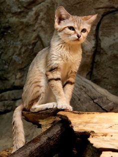 #動物 #貓 #表情 #低抄 #前中後景