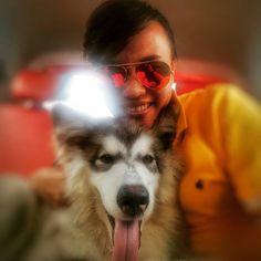My love Keiko - alaskan malamute