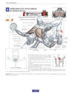 Aperturas con mancuernas en banco plano. Más ejercicios en www.EJERCICIOS.demusculos.com