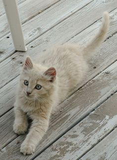 I have a grown-up kitty who must have looked just like this when he was a kitten.  I wuv hims.  :)