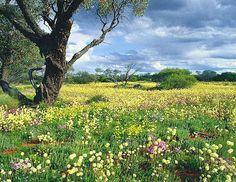 Wildflower carpet in Western Australia