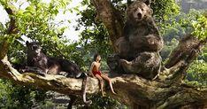 The Jungle Book 2016 Movie wallpapers Wallpapers) – HD Wallpapers The Jungle Book, Jungle Book 2016, Disney Live, Walt Disney, Disney Parks, Disney Pixar, Live Action, If Rudyard Kipling, Movie Wallpapers