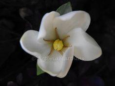 flower white macro fine art photography print 5x7