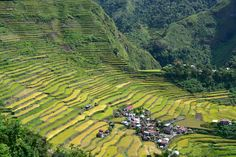 The picturesque Ifugao Rice Terraces on the island of Luzon, Philippines. For 2,000 years, people have been growing rice on terraces that follow the contours of the Cordilleras Mountains. The most famous ones can be found around the town of Banaue. They were created by the Ifugao ethnic people without modern tools and are still used today.