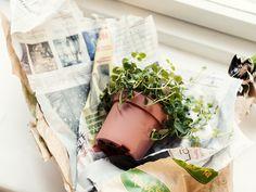Plant from Eeva Kolu's blog Kaikki mitä rakastin