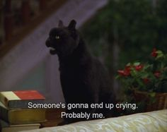 """Someone's gonna end up crying.""- Salem (Sabrina The Teenage Witch) Salem Sabrina, Sabrina The Witch, Sabrina Cat, Salem Saberhagen, Funny Memes, Hilarious, Funny Quotes, Qoutes, Humour Quotes"