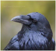 Raven by surrealistic-gloom on DeviantArt