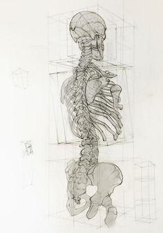 Drawing Human Anatomy Analytic Drawing by Jesús Guédez, via Behance Anatomy Bones, Anatomy Art, Human Anatomy Drawing, Body Drawing, Human Anatomy For Artists, Skeleton Drawings, Art Drawings, Pencil Drawings, Drawing Art