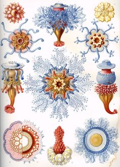 A form of art: Ernst Haeckel,Scientific drawing. A form of art: Ernst Haeckel, Dibujo científico. Ernst Haeckel Art, Art Et Nature, Nature Prints, Nature Decor, Science Nature, Impressions Botaniques, Natural Form Art, Jellyfish Art, Illustration Botanique