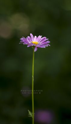31 Best Single Flower Images Flowers Plants Garden