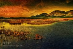 Sunset  birds over the marsh by SilviaSil. Please Like http://fb.me/go4photos and Follow @go4fotos Thank You. :-)