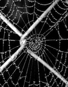 chain link web.