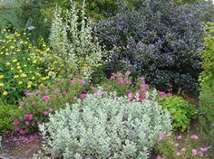 drought resistant flowers/plants