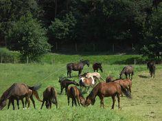Paardenvallei, Landgoed Cortils, Dalhem (B)