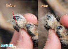 how to cut yorkies nails - Google Search