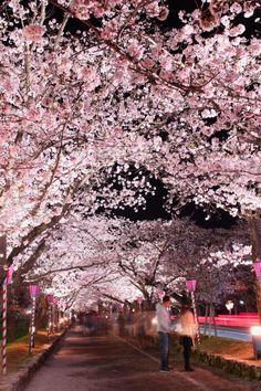 569:「大村公園の夜桜。 たくさんの人に愛され、見守られて美しく凛として咲いています。 お昼に見せる表情とはまた、違って見えました。」@大村公園