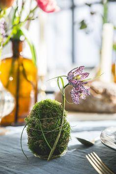 DIY-Moos-Ei – Pflanzenfreude.de