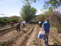 El IBI de Rustica se subvenciona a los agricultores segorbinos por séptimo año consecutivo