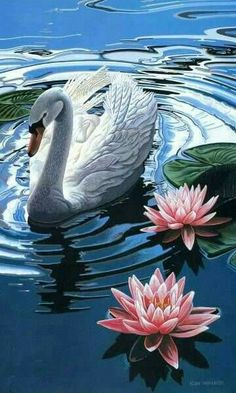 Swan and water lilies Beautiful Swan, Beautiful Birds, Animals Beautiful, Nature Pictures, Art Pictures, Swan Painting, Lake Painting, Image Nature, Wildlife Art