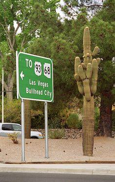 Route 66 & Cactus. Desert cactus in Kingman, Arizona.