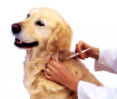 Primeiros Socorros PET: Protocolo de vacinação