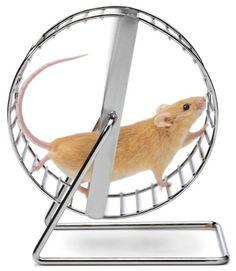 Mousewheel of life