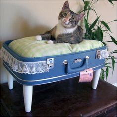 Suitcase made into cat bed