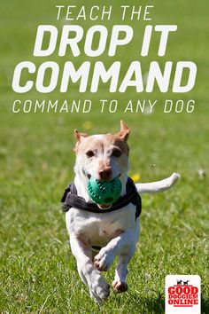 Harmonious Reputed Dog Training Click Site Advice For Pet