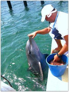 Delfinario en Varadero. Varadero, Cuba, North Shore, Scenery