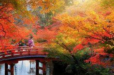 Картинки по запросу осень в японии
