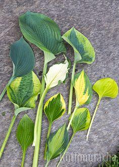 Muoto, Plant Leaves, Garden, Plants, Garten, Gardening, Plant, Outdoor, Gardens